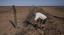 IMAGES: Mending Fences in the War Between Dingoes and Sheep