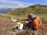 IMAGES: The Life and Death of Nigel, the World's Loneliest Seabird