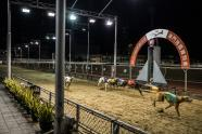 IMAGES: A Greyhound Racetrack Meets Its Demise