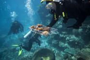 IMAGES: Australia Pledges Millions of Dollars in Bid to Rescue Great Barrier Reef