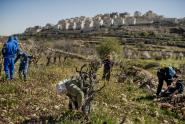 IMAGE: In West Bank, 99.7 Percent of Public Land Grants by Israel Go to Settlers