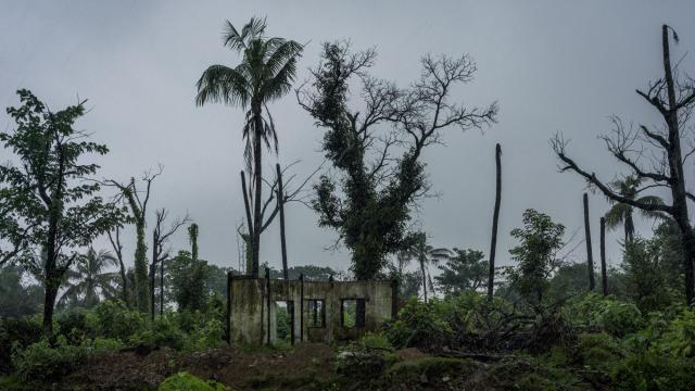 FILE-- A destroyed mosque and charred palm trees in a Rohingya village that was razed in Maungdaw, Myanmar, July 26, 2018. About 2,200 Rohingya Muslims who fled violence in Myanmar last year are set to be repatriated on Nov. 15. It is a process that has been repeatedly delayed, and one that few, apart from the Myanmar and Bangladesh governments, seem to think is a good idea.(Adam Dean/The New York Times)