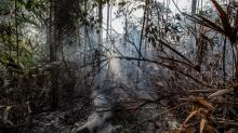 IMAGES: 'It's really close': How the Amazon rainforest could self-destruct