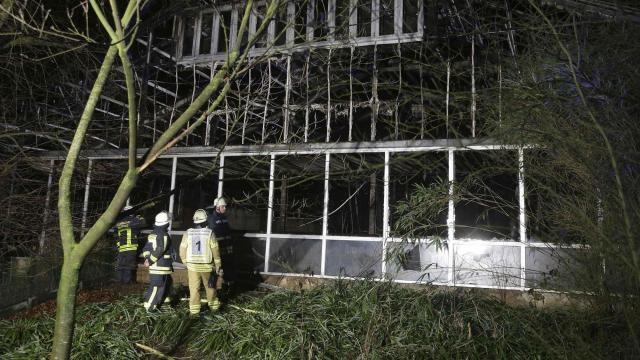 Dozens of animals killed as fire tears through monkey enclosure at Germany's Krefeld Zoo
