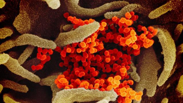 January 29 coronavirus news