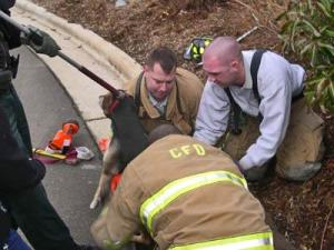 Carrboro firefighters pull a dog from a stormwater drainage pipe. (Photo courtesy of Carrboro Fire Department)