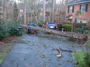 A fallen tree totaled a car in a neighborhood off Ridge Road in Raleigh during a storm with high winds Wednesday, Jan. 29, 2009. (Photo submitted by: Brad Stimmel)