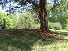 Vance deputy dies after hitting tree