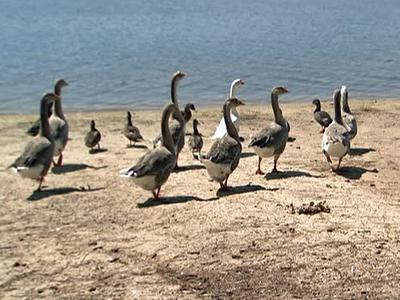 Due to higher than normal bacteria levels, people are being asked not to feed the birds at Lake Wheeler.