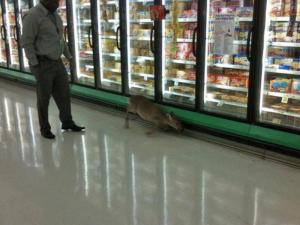 A deer was spotted Tuesday inside the Lowes Foods at 1845 Aversboro Road in Garner.