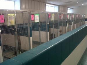 Newly expanded Wake County Animal Center at 820 Beacon Lake Drive in Raleigh.