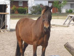Buddy has been missing from his Willow Spring pasture since April 16.