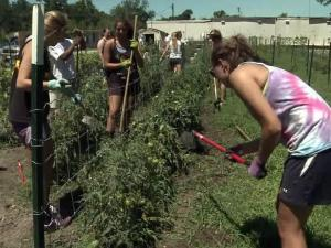 Days after a thief grabbed bushels of grub from a Habitat for Humanity garden in Rocky Mount, a crew of green-thumb Girl Scouts pitched in to help the organization recover.