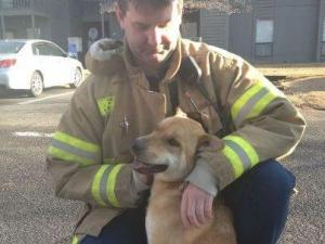 The Fayetteville Fire Department helped reunited this dog with its owner. The dog was found running around outside Briarcliff Condos after a fire Wednesday.