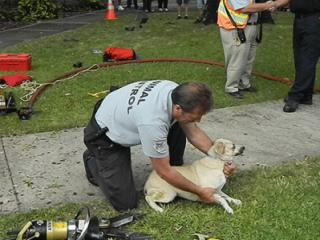 An animal control officer helped a dog after a truck crash in Carthage. (Photo courtesy: Billy Marts)