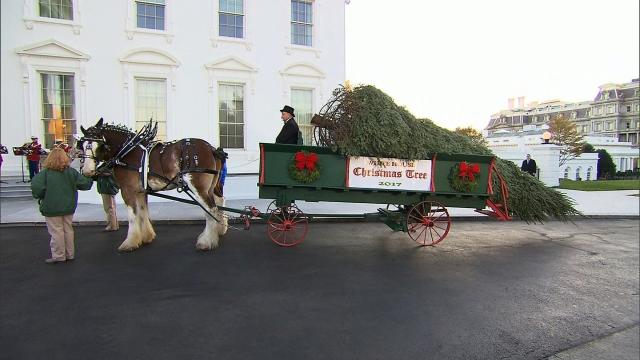 With tree arrival, it's beginning to look at lot like Christmas at the White House