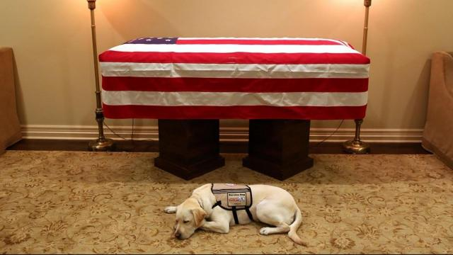 Sully the service dog accompanies Bush one last time