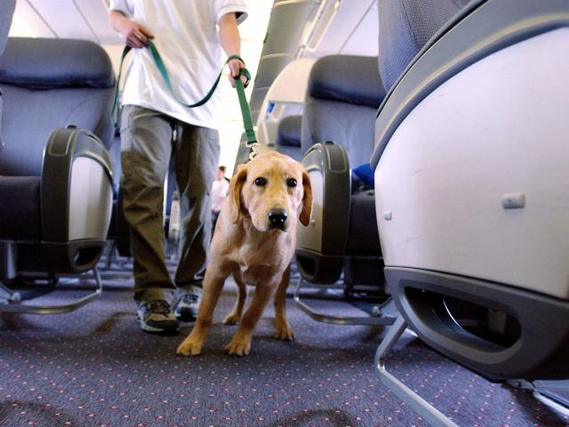 Feds announce new guidelines for service and emotional support animals on planes