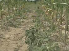 Report: 75 Percent of N.C. Suffering From Drought