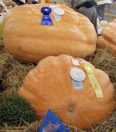 Congrats to NC Half-Ton Pumpkin!