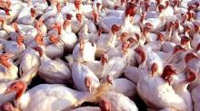 IMAGE: State suspends poultry shows to prevent possible bird flu spread