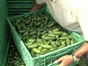 State officials announced a recall of jalapeno peppers and avocados distributed in North Carolina on July 17, 2008.