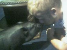 Family fights to keep pig as pet