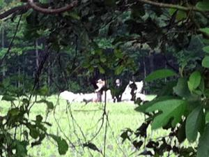 Investigators examine a small plane that crashed in a wooded area in Onslow County on May 6, 2011, killing the two people on board. (Photo courtesy of WNCT-TV)