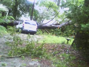 Trees down in Rocky Mount