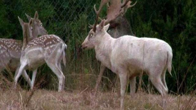 State wildlife officers killed seven fallow deer and two white-tailed deer on Sept. 20 in a pen on a Randolph County farm because the owner wasn't licensed to keep the animals.