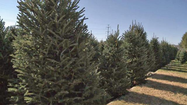 Local Christmas tree farms let customers cut their own :: WRAL.com