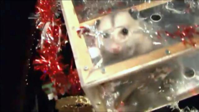 Christmas Events In Brasstown Nc 2020 Possums once again absent from New Year's Eve event :: WRAL.com