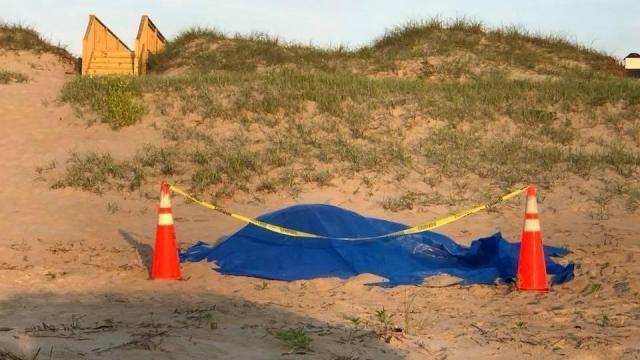 Wild mare struck, killed by car on North Carolina beach (Credit: Corolla Wild Horse Fund Facebook)