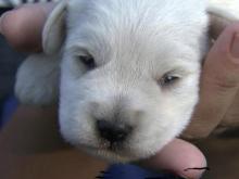 Puppy mill bust renews debate over NC regulations