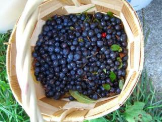 North Carolina also boasts an official red berry, the strawberry, and official blue berry. You guessed it, it's the blueberry.