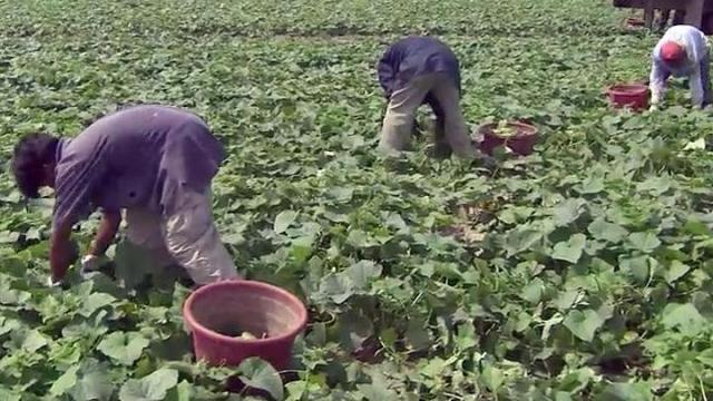 Court backs farmworkers ability to organize