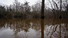 Neuse River near Goldsboro