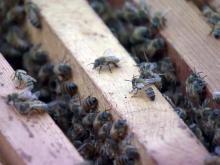 Beehive, honeybee, bee