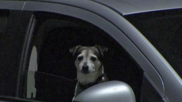 A bill filed Wednesday would make drivers holding a live animals on their laps subject to a $100 fine.