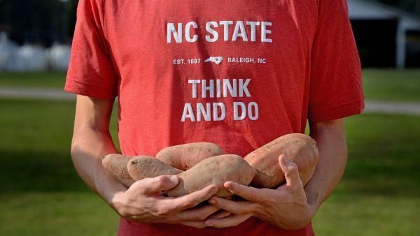 NCSU Sweet Potatoes