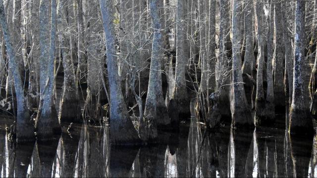 EARNHARDT-6 Roanoke River