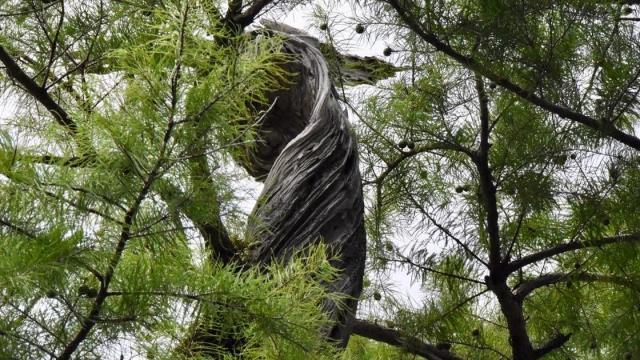EARNHARDT-5 Black River tree