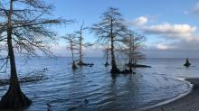 IMAGES: TOM EARNHARDT: Sound voyages along the Chowan River