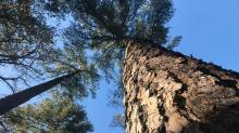IMAGES: TOM EARNHARDT: Trees hold up the sky