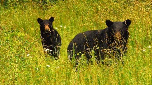EARNHARDT-3 Bears