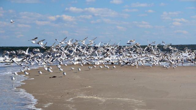 EARNHARDT-7 Terns
