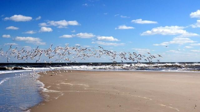 EARNHARDT-7 Brunswick beach