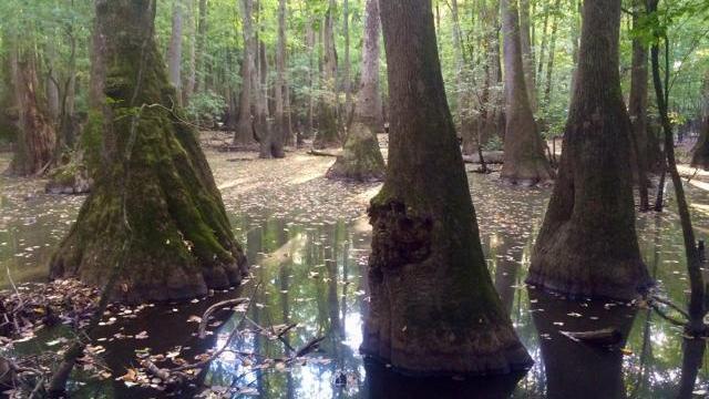 EARNHART-9 Wetlands forests