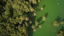 IMAGES: JARED LLOYD: Firsthand experience with an algal bloom