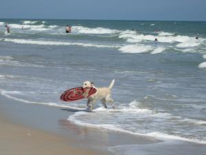 Luke at the beach this summer